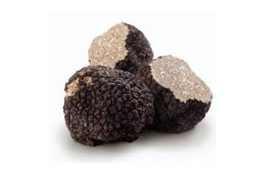 Truffes fraîche Uncinatum categorie 1